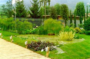 Vendita piante palustri piante vivaio piante acquatiche for Piante palustri laghetto