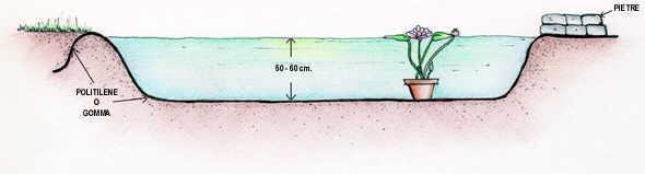 Vendita piante palustri piante vivaio piante acquatiche for Piante ossigenanti per laghetto